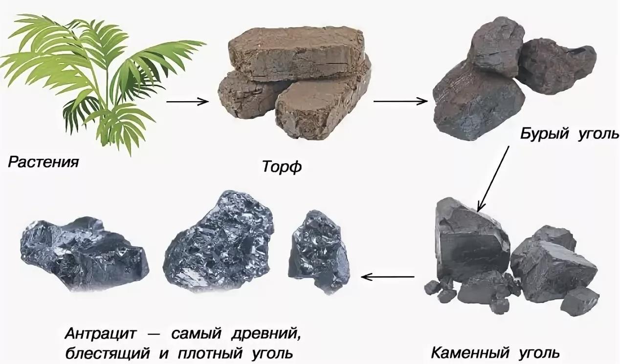 Происхождение угля